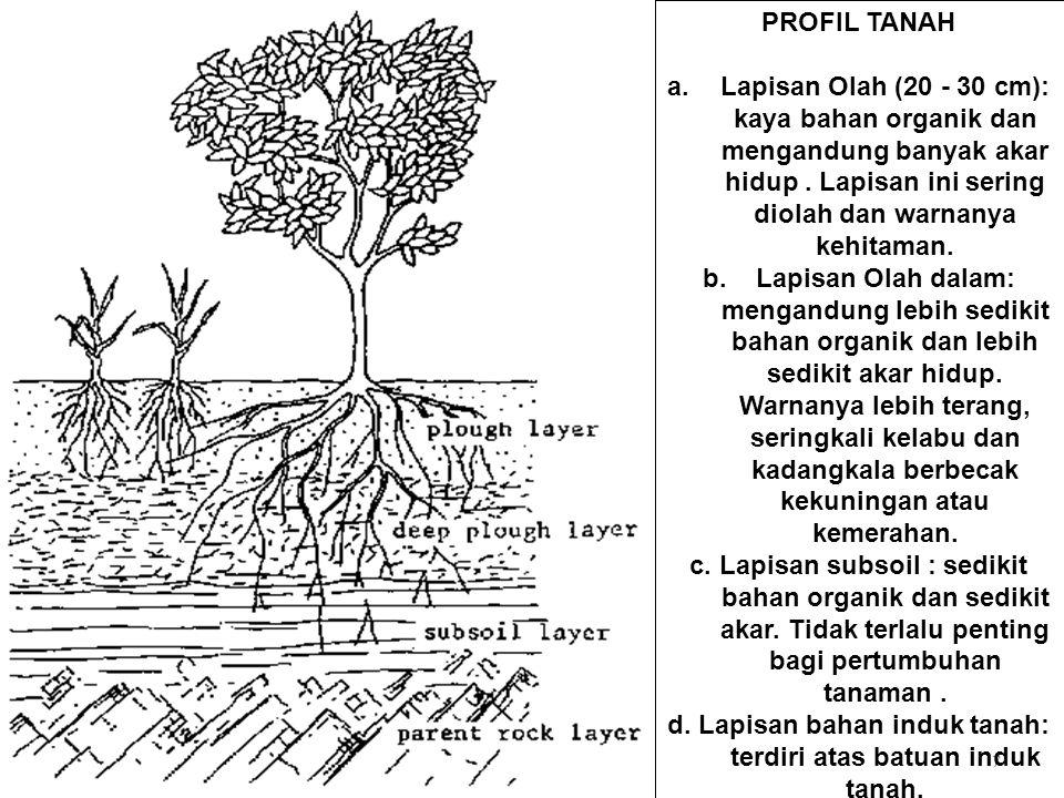 7 PROFIL TANAH a.Lapisan Olah (20 - 30 cm): kaya bahan organik dan mengandung banyak akar hidup. Lapisan ini sering diolah dan warnanya kehitaman. b.L