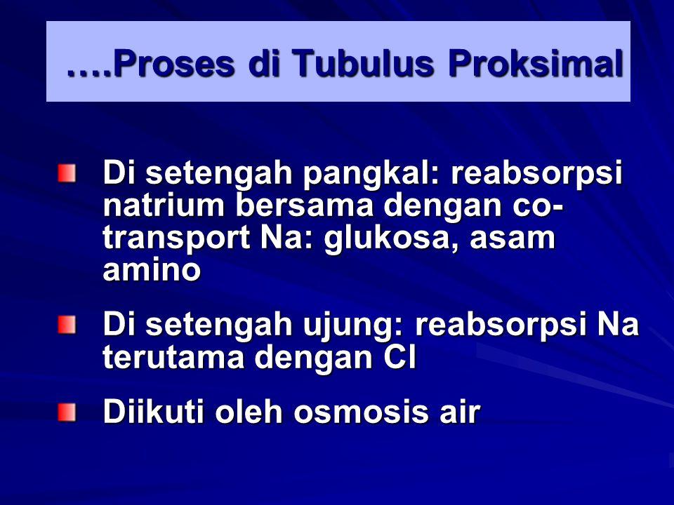 ….Proses di Tubulus Proksimal Di setengah pangkal: reabsorpsi natrium bersama dengan co- transport Na: glukosa, asam amino Di setengah ujung: reabsorp