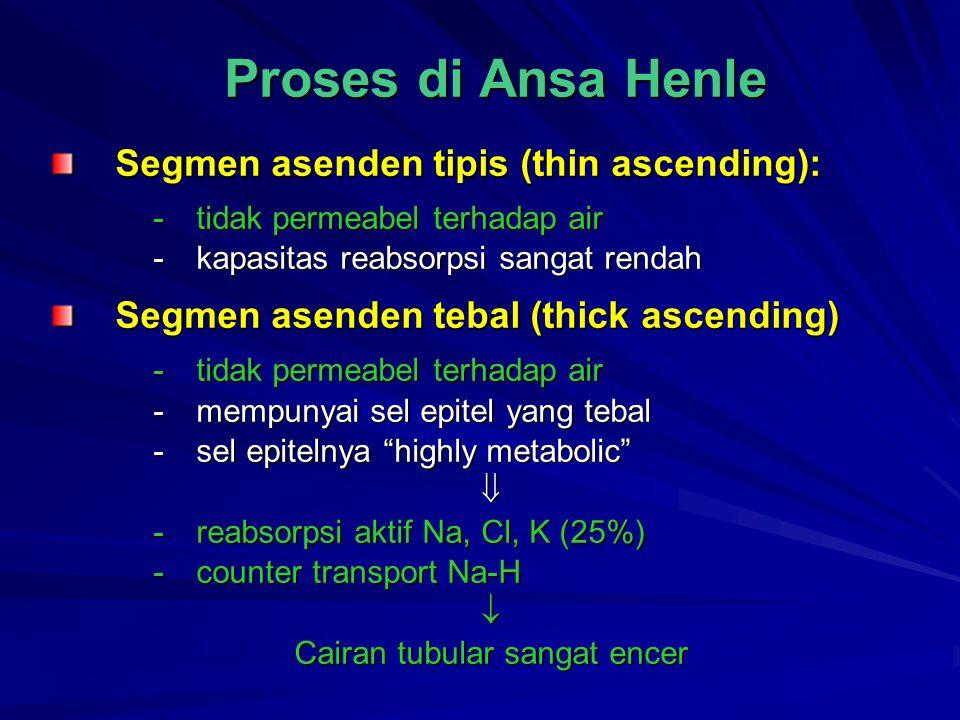Proses di Ansa Henle Segmen asenden tipis (thin ascending): -tidak permeabel terhadap air -kapasitas reabsorpsi sangat rendah Segmen asenden tebal (th