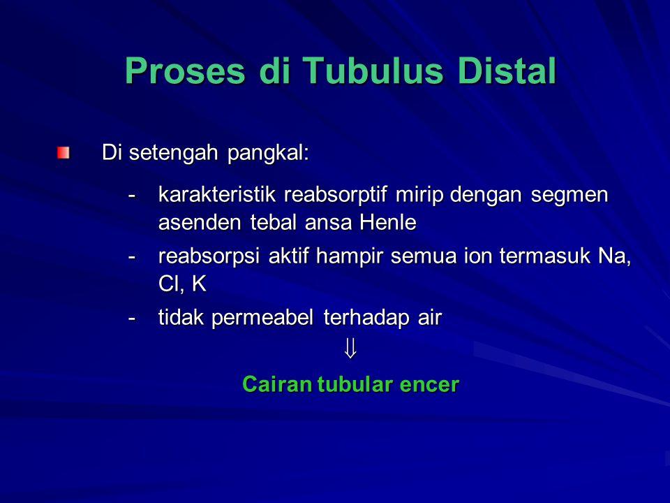 Proses di Tubulus Distal Di setengah pangkal: -karakteristik reabsorptif mirip dengan segmen asenden tebal ansa Henle -reabsorpsi aktif hampir semua i