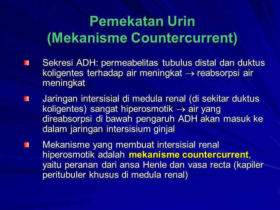 Pemekatan Urin (Mekanisme Countercurrent) Sekresi ADH: permeabelitas tubulus distal dan duktus koligentes terhadap air meningkat  reabsorpsi air meni
