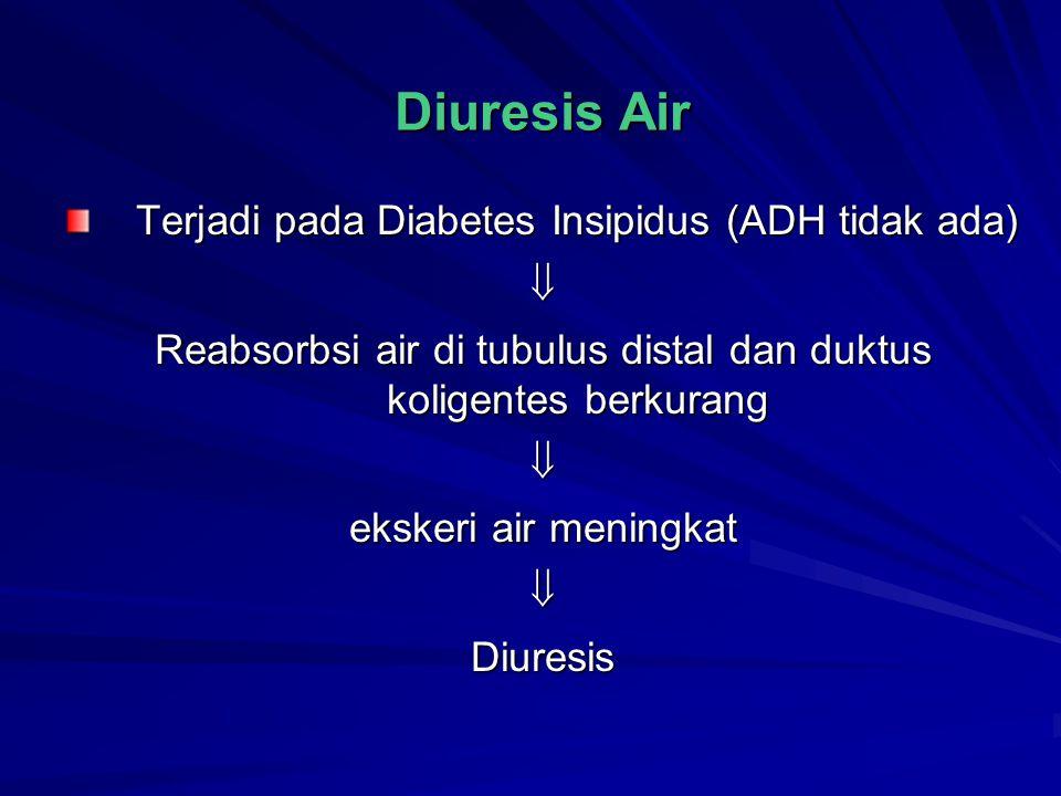 Diuresis Air Terjadi pada Diabetes Insipidus (ADH tidak ada)  Reabsorbsi air di tubulus distal dan duktus koligentes berkurang  ekskeri air meningka