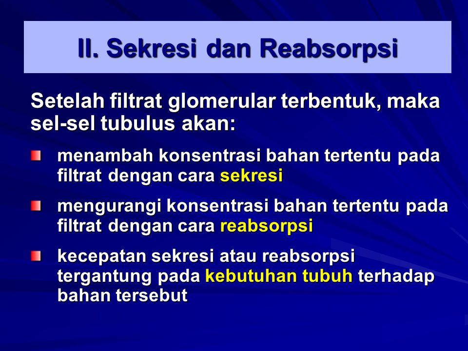 II. Sekresi dan Reabsorpsi Setelah filtrat glomerular terbentuk, maka sel-sel tubulus akan: menambah konsentrasi bahan tertentu pada filtrat dengan ca