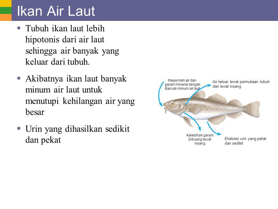 Ikan Air Laut  Tubuh ikan laut lebih hipotonis dari air laut sehingga air banyak yang keluar dari tubuh.  Akibatnya ikan laut banyak minum air laut