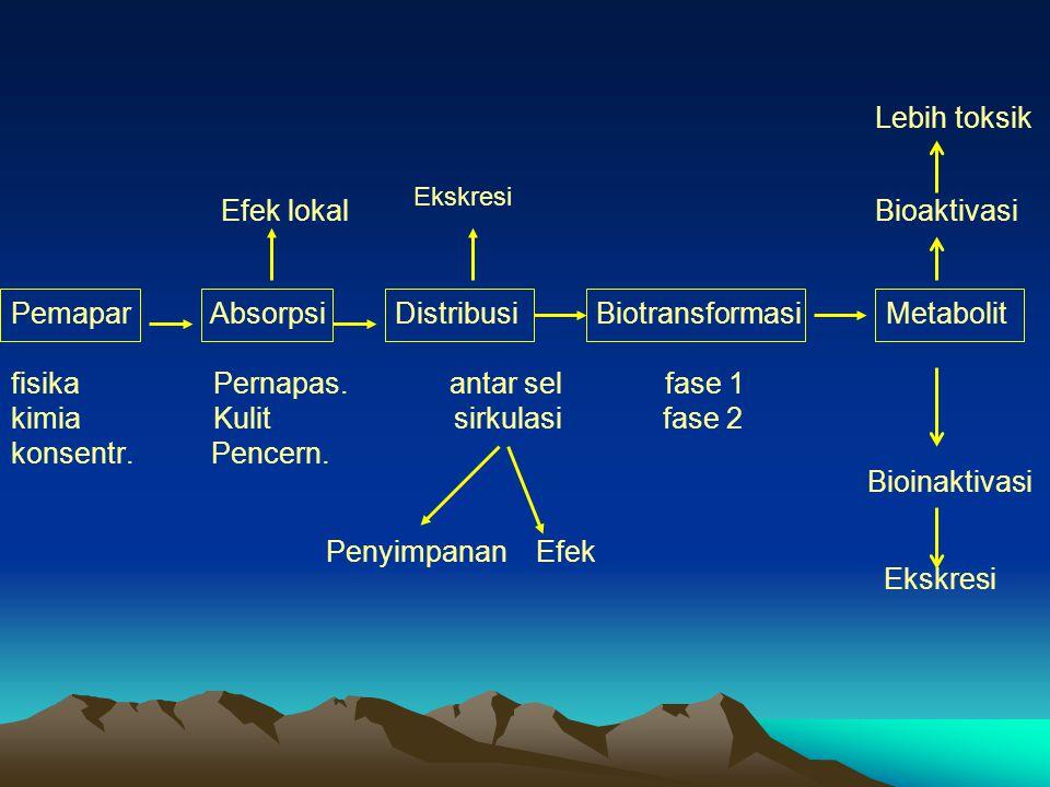 Lebih toksik Efek lokal Bioaktivasi Pemapar Absorpsi Distribusi Biotransformasi Metabolit fisika Pernapas.