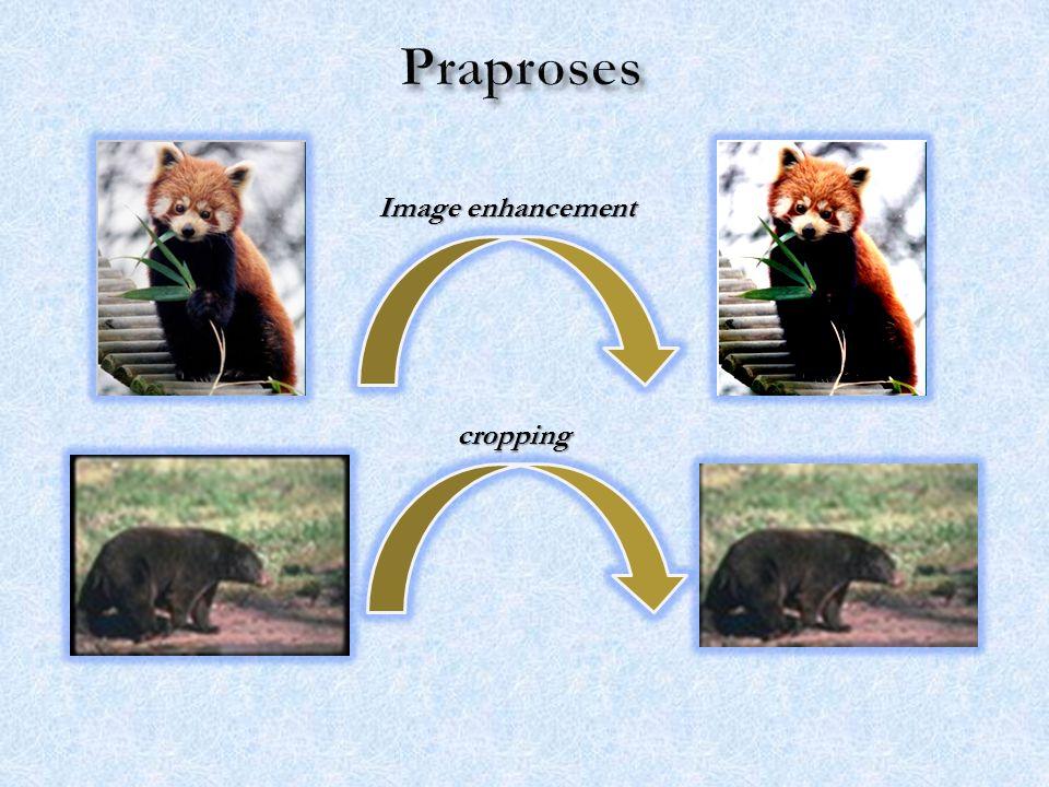Kelas Red panda Kelas Skunk Nilai Recall – Precision tiap kelas citra