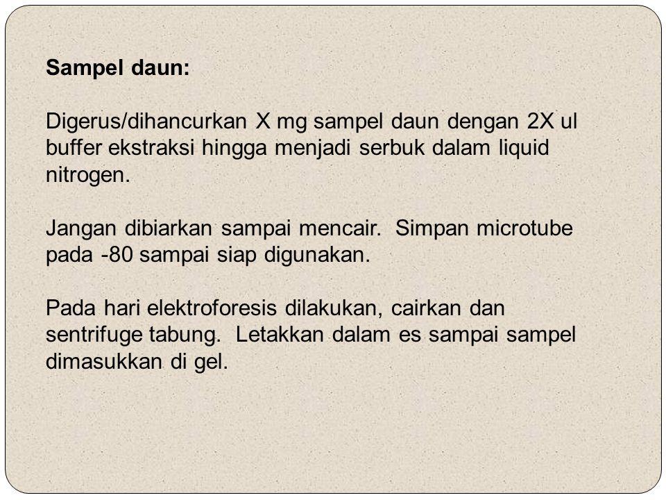 Sampel daun: Digerus/dihancurkan X mg sampel daun dengan 2X ul buffer ekstraksi hingga menjadi serbuk dalam liquid nitrogen. Jangan dibiarkan sampai m