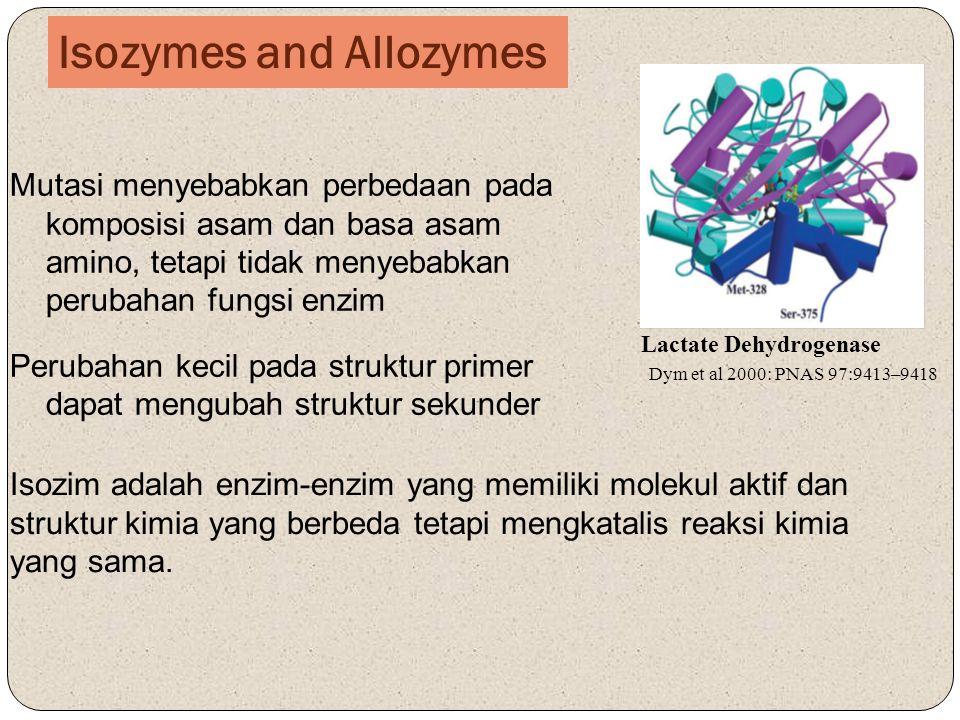 Isozymes and Allozymes Mutasi menyebabkan perbedaan pada komposisi asam dan basa asam amino, tetapi tidak menyebabkan perubahan fungsi enzim Perubahan kecil pada struktur primer dapat mengubah struktur sekunder Lactate Dehydrogenase Dym et al 2000: PNAS 97:9413–9418 Isozim adalah enzim-enzim yang memiliki molekul aktif dan struktur kimia yang berbeda tetapi mengkatalis reaksi kimia yang sama.