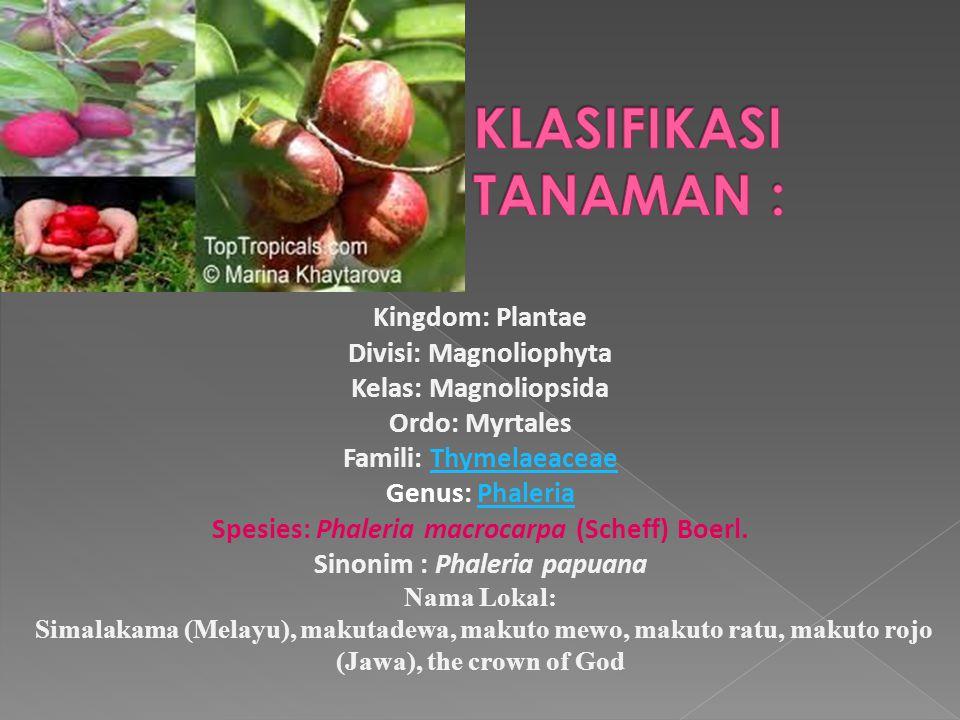 Kingdom: Plantae Divisi: Magnoliophyta Kelas: Magnoliopsida Ordo: Myrtales Famili: Thymelaeaceae Genus: Phaleria Spesies: Phaleria macrocarpa (Scheff)