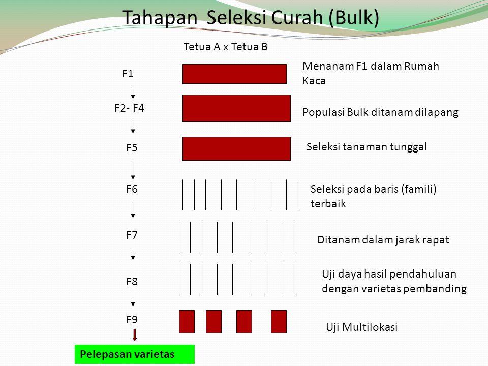 Tahapan Seleksi Curah (Bulk) Tetua A x Tetua B F1 F2- F4 Menanam F1 dalam Rumah Kaca Populasi Bulk ditanam dilapang Seleksi tanaman tunggal Seleksi pa