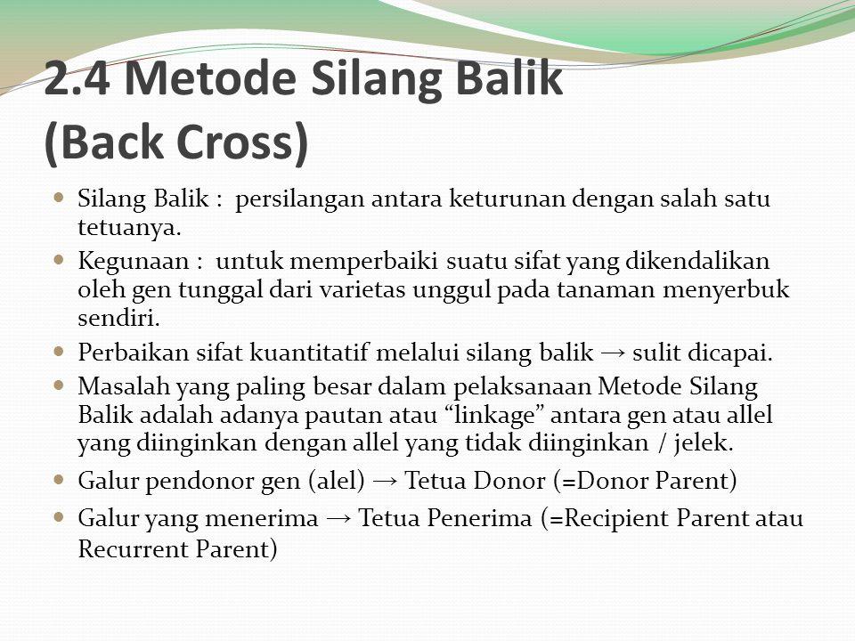2.4 Metode Silang Balik (Back Cross) Silang Balik : persilangan antara keturunan dengan salah satu tetuanya. Kegunaan : untuk memperbaiki suatu sifat