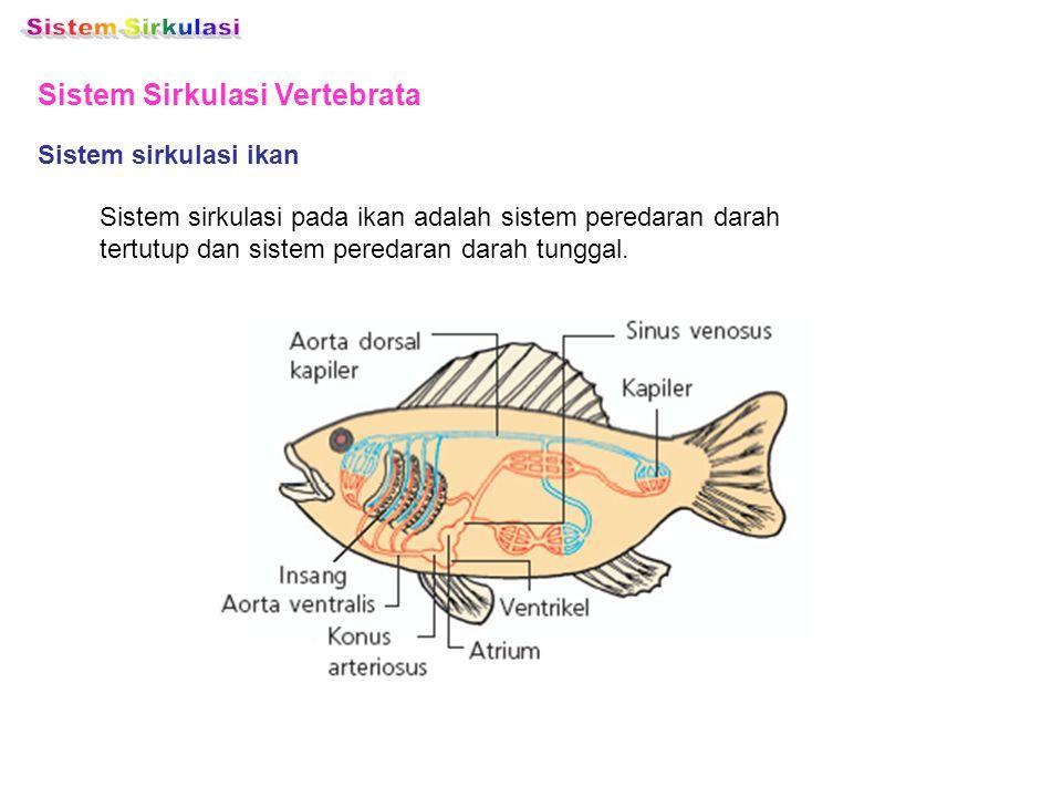 Sistem Sirkulasi Vertebrata Sistem sirkulasi ikan Sistem sirkulasi pada ikan adalah sistem peredaran darah tertutup dan sistem peredaran darah tunggal