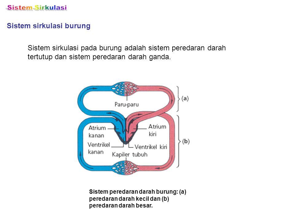Sistem sirkulasi burung Sistem sirkulasi pada burung adalah sistem peredaran darah tertutup dan sistem peredaran darah ganda. Sistem peredaran darah b