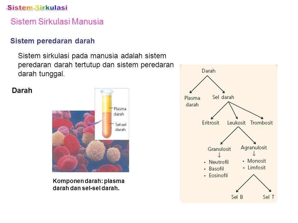 Sistem Sirkulasi Manusia Sistem peredaran darah Sistem sirkulasi pada manusia adalah sistem peredaran darah tertutup dan sistem peredaran darah tungga