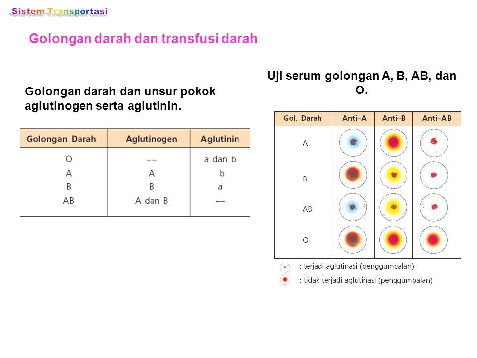 Golongan darah dan transfusi darah Golongan darah dan unsur pokok aglutinogen serta aglutinin. Uji serum golongan A, B, AB, dan O.