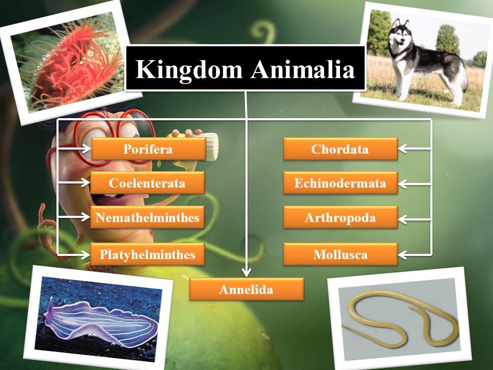 Porifera Coelenterata Platyhelminthes Nemathelminthes Annelida Mollusca Arthropoda Echinodermata Chordata Kingdom Animalia