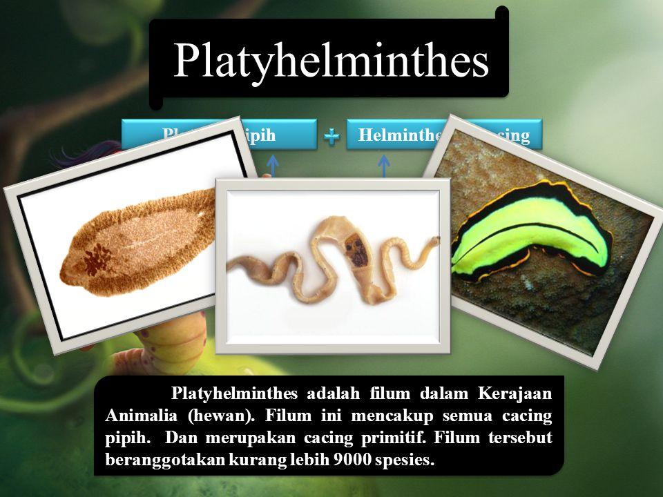 Platyhelminthes Platyhelminthes adalah filum dalam Kerajaan Animalia (hewan). Filum ini mencakup semua cacing pipih. Dan merupakan cacing primitif. Fi