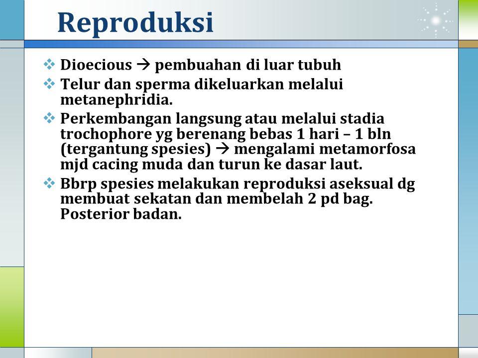 Reproduksi  Dioecious  pembuahan di luar tubuh  Telur dan sperma dikeluarkan melalui metanephridia.  Perkembangan langsung atau melalui stadia tro