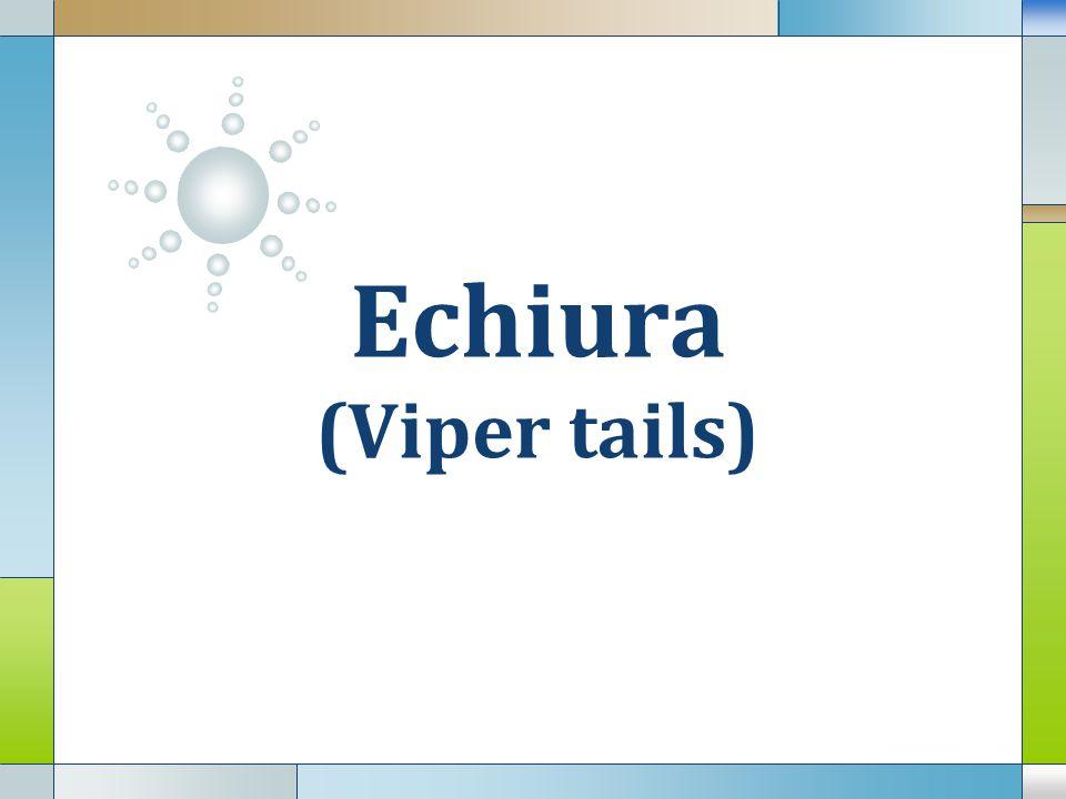 LOGO Echiura (Viper tails)