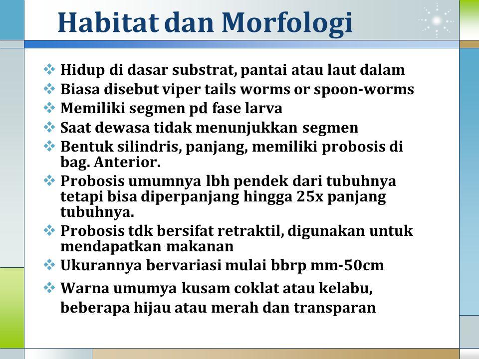 Habitat dan Morfologi  Hidup di dasar substrat, pantai atau laut dalam  Biasa disebut viper tails worms or spoon-worms  Memiliki segmen pd fase lar