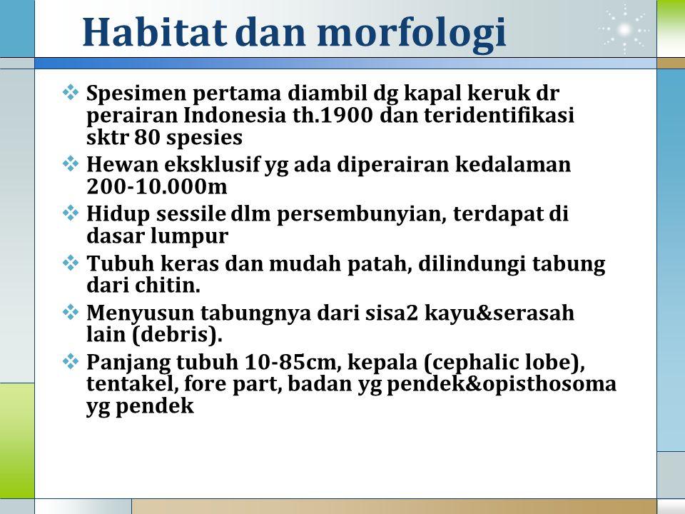 Habitat dan morfologi  Spesimen pertama diambil dg kapal keruk dr perairan Indonesia th.1900 dan teridentifikasi sktr 80 spesies  Hewan eksklusif yg