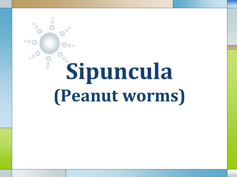  Memiliki tentakel berbentuk spiral > 250, tentakel bersilia yg berfungsi untuk pertukaran gas, mengambil makanan dan memperoleh hidrogen sulfide  Opistosome di posterior terdiri dari 5-23 segmen yg pendek, dilengkapi dg setae berfungsi sbg jangkar (saat burrowing dlm lumpur).