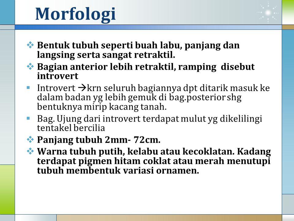 Morfologi (lanjutan)  Introvert umumnya lebih pendek dr badan  Betina yg sedang matang telur berwarna jingga atau merah muda.