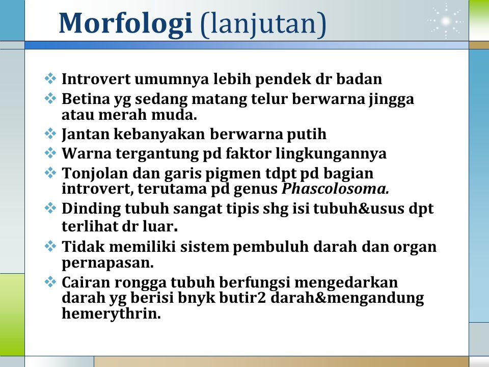 Morfologi (lanjutan)  Introvert umumnya lebih pendek dr badan  Betina yg sedang matang telur berwarna jingga atau merah muda.  Jantan kebanyakan be