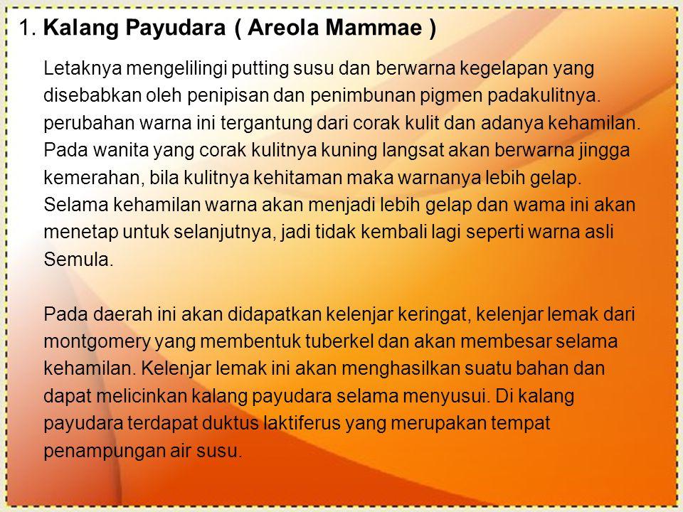 1. Kalang Payudara ( Areola Mammae ) Letaknya mengelilingi putting susu dan berwarna kegelapan yang disebabkan oleh penipisan dan penimbunan pigmen pa