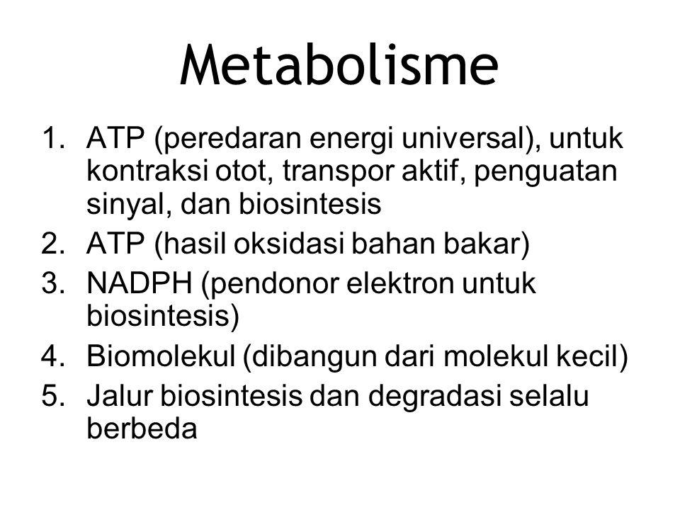 Metabolisme 1.ATP (peredaran energi universal), untuk kontraksi otot, transpor aktif, penguatan sinyal, dan biosintesis 2.ATP (hasil oksidasi bahan ba