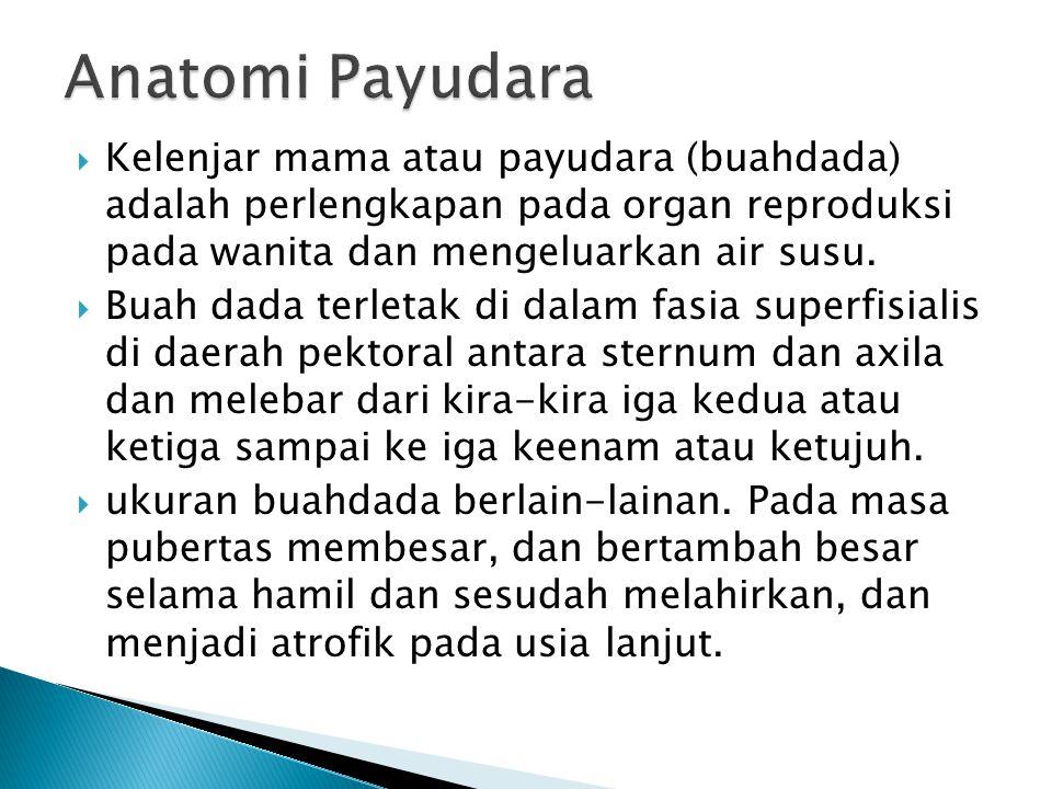  Kelenjar mama atau payudara (buahdada) adalah perlengkapan pada organ reproduksi pada wanita dan mengeluarkan air susu.  Buah dada terletak di dala
