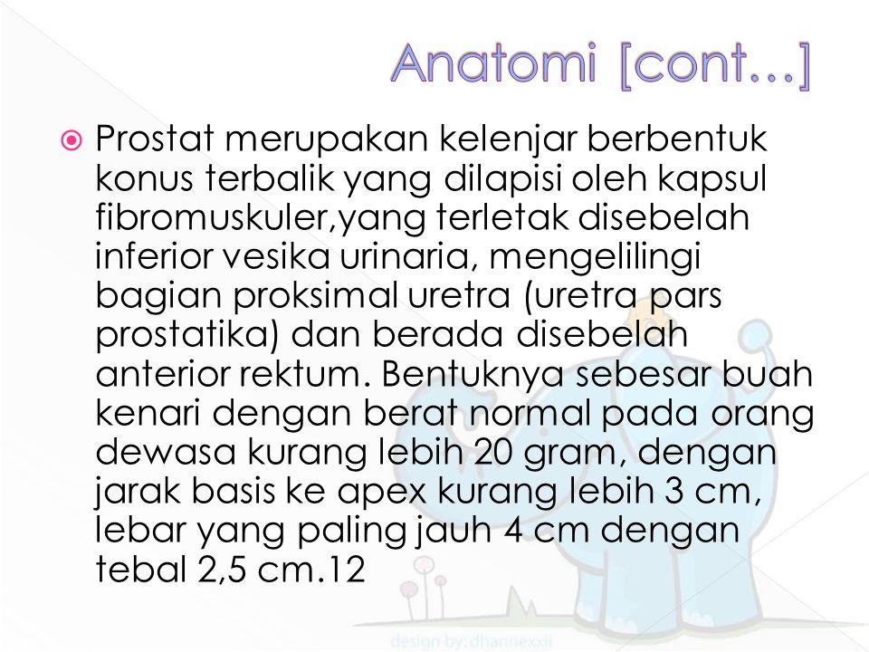  Prostat merupakan kelenjar berbentuk konus terbalik yang dilapisi oleh kapsul fibromuskuler,yang terletak disebelah inferior vesika urinaria, mengelilingi bagian proksimal uretra (uretra pars prostatika) dan berada disebelah anterior rektum.