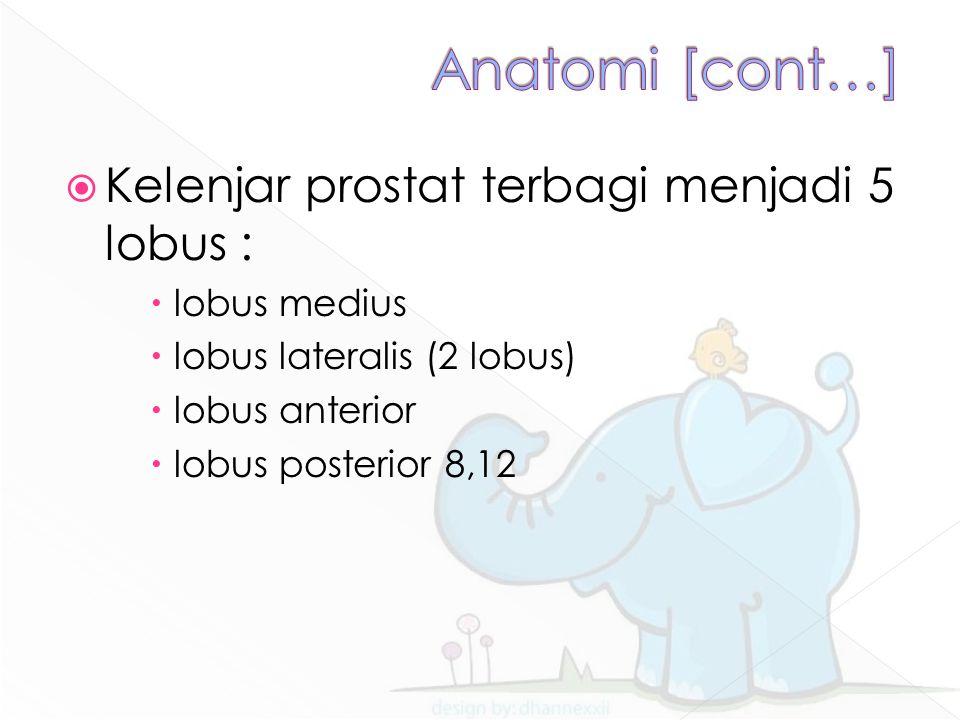  Kelenjar prostat terbagi menjadi 5 lobus :  lobus medius  lobus lateralis (2 lobus)  lobus anterior  lobus posterior 8,12