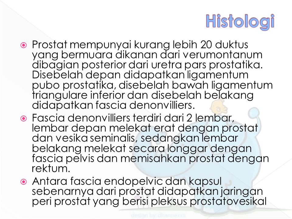  Prostat mempunyai kurang lebih 20 duktus yang bermuara dikanan dari verumontanum dibagian posterior dari uretra pars prostatika. Disebelah depan did