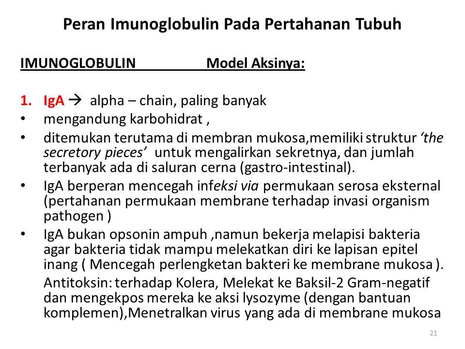 21 Peran Imunoglobulin Pada Pertahanan Tubuh IMUNOGLOBULINModel Aksinya: 1.IgA  alpha – chain, paling banyak mengandung karbohidrat, ditemukan teruta