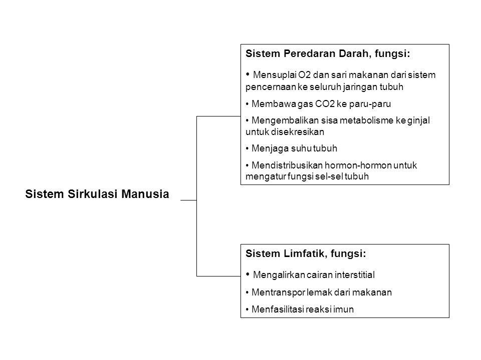 Sistem Sirkulasi Manusia Sistem Peredaran Darah, fungsi: Mensuplai O2 dan sari makanan dari sistem pencernaan ke seluruh jaringan tubuh Membawa gas CO