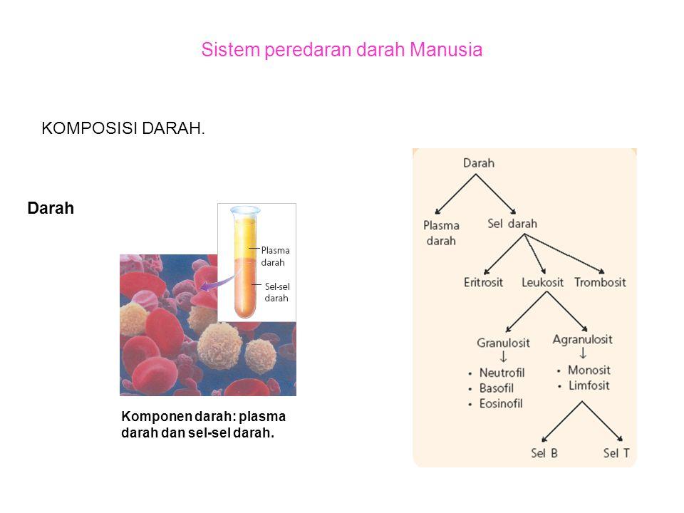 Sistem peredaran darah Manusia KOMPOSISI DARAH. Darah Komponen darah: plasma darah dan sel-sel darah.