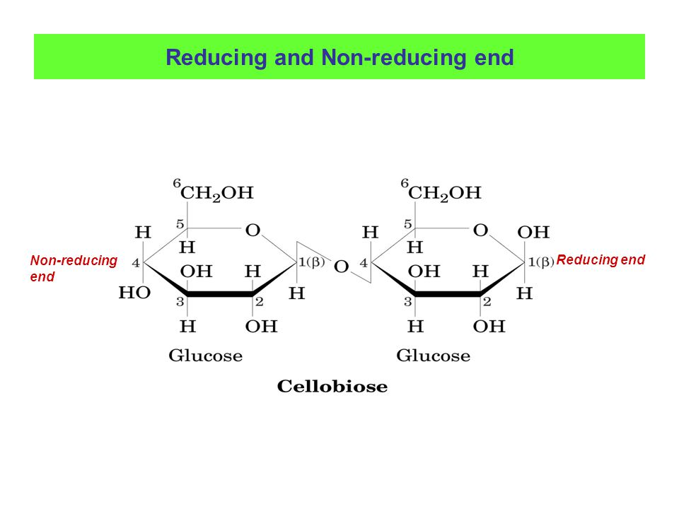 Reducing and Non-reducing end Reducing end Non-reducing end