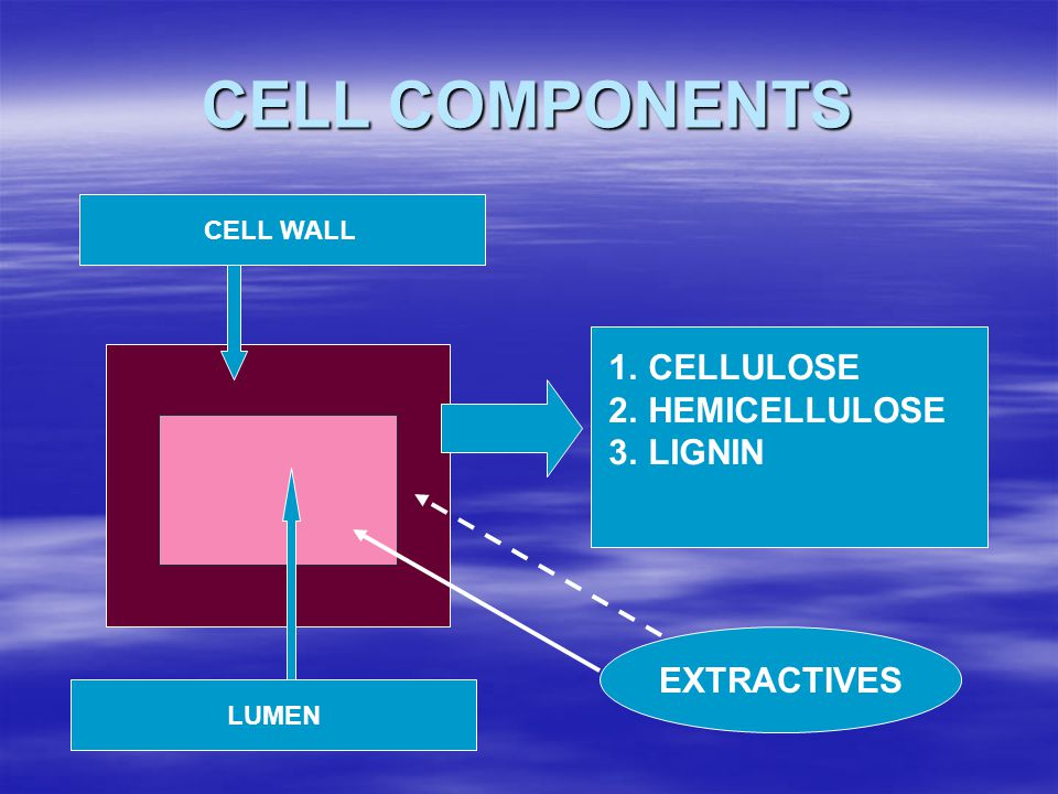 CELL COMPONENTS Lumen (Rongga Sel) LUMEN CELL WALL 1.CELLULOSE 2.HEMICELLULOSE 3.LIGNIN EXTRACTIVES