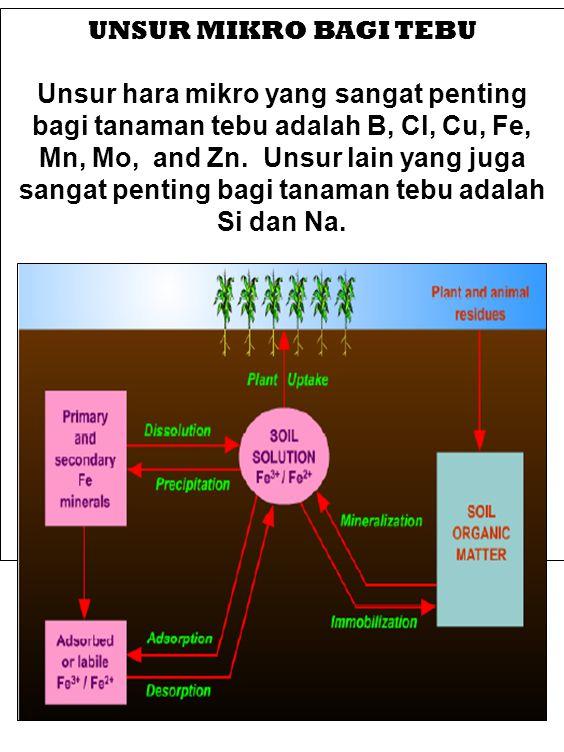 Boron (B) Defisiensi boron tanaman tebu biasanya terjadi pada tanah- tanah berpasir.