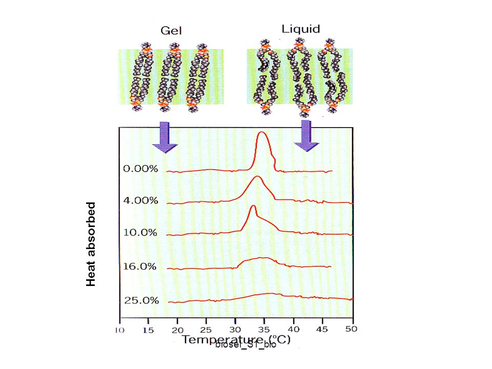 Fluiditas membran memungkinkan terjadinya interaksi dalam membran: 1.Penyisipan protein/ kelompok protein tertentu pada tempat tertentu di membran untuk membentuk struktur seperti : a.