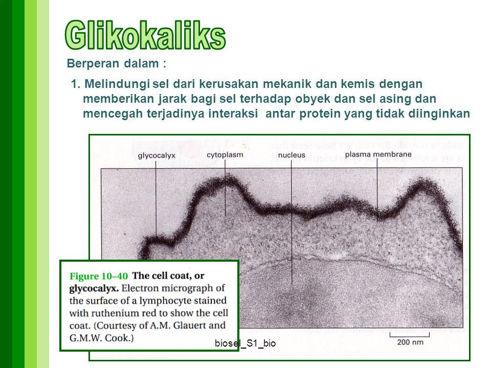 Berperan dalam : 1. Melindungi sel dari kerusakan mekanik dan kemis dengan memberikan jarak bagi sel terhadap obyek dan sel asing dan mencegah terjadi