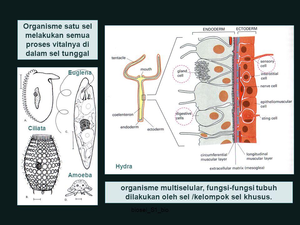 Organisme satu sel melakukan semua proses vitalnya di dalam sel tunggal organisme multiselular, fungsi-fungsi tubuh dilakukan oleh sel /kelompok sel k
