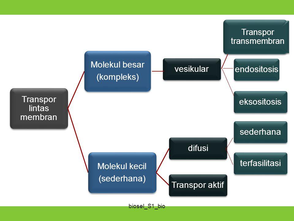 Transpor lintas membran Molekul besar (kompleks) endositosiseksositosisvesikular Molekul kecil (sederhana) difusiTranspor aktifsederhanaterfasilitasi