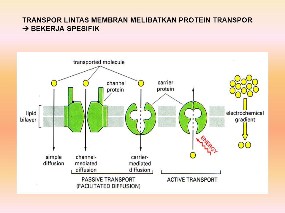 PROTEIN CHANNEL biosel_S1_bio