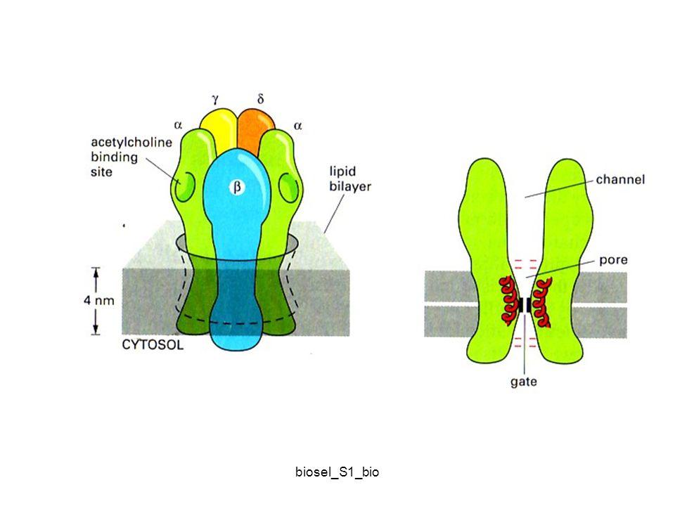 Kinetika difusi pasif dan difusi terfasilitasi protein carrier biosel_S1_bio