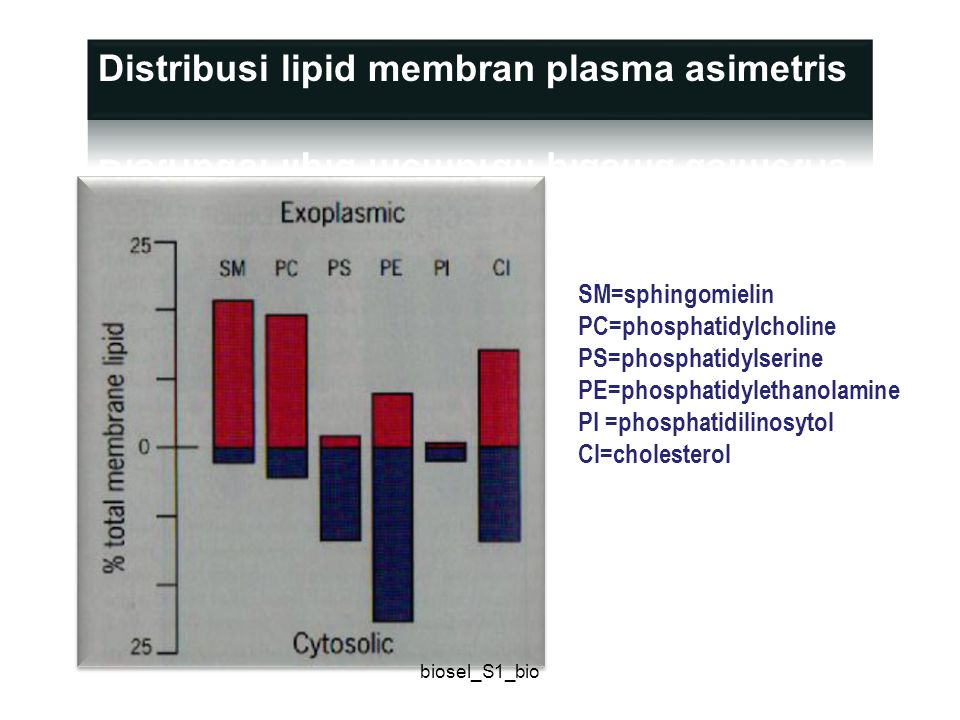 SM=sphingomielin PC=phosphatidylcholine PS=phosphatidylserine PE=phosphatidylethanolamine PI =phosphatidilinosytol Cl=cholesterol biosel_S1_bio