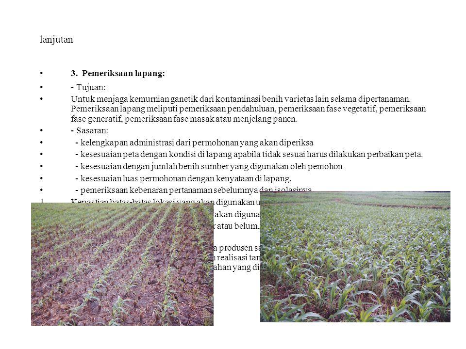 lanjutan 3. Pemeriksaan lapang: - Tujuan: Untuk menjaga kemurnian ganetik dari kontaminasi benih varietas lain selama dipertanaman. Pemeriksaan lapang