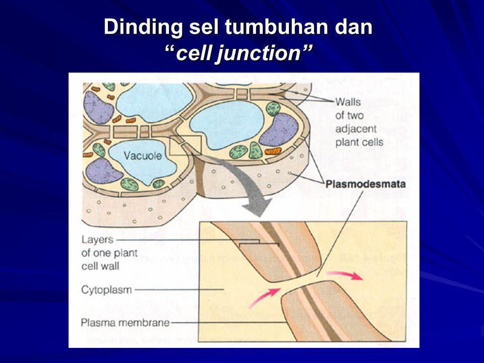 """Dinding sel tumbuhan dan """"cell junction"""""""