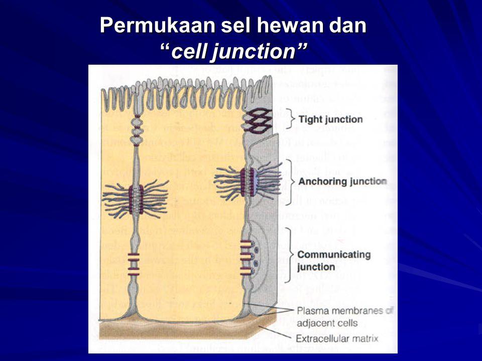 "Permukaan sel hewan dan ""cell junction"""